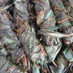 Основные этапы заготовки, ферментации иван-чая