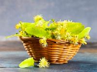 лечебные свойства и противопоказания чая из липового цвета