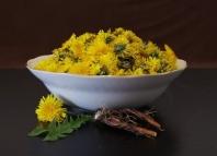 Как приготовить чай из одуванчиков, полезные свойства растения