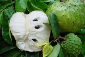 Фото плодов гравиолы