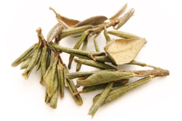 Лечебные свойства травы саган-дайля, противопоказания, отзывы