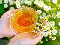 лечебные свойства травяного чая из ромашки