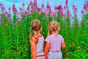 можно ли растение иван-чай детям