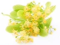 Лечебные свойства чая из липового цвета, противопоказания