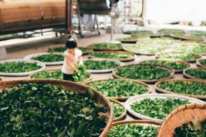 чай greenfield фото
