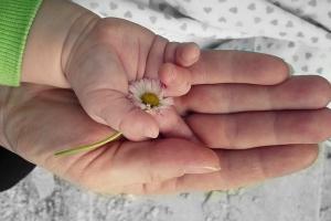 влияние ромашкового чая на новорожденного